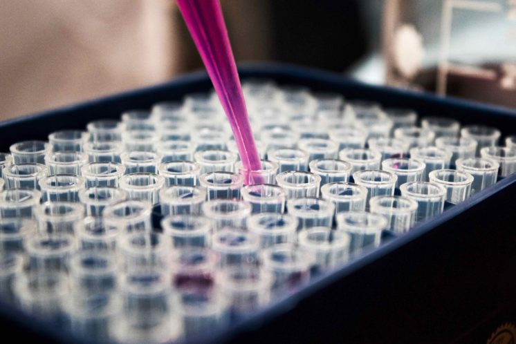 Scientific image of pipette with pink liquid being placed into plate