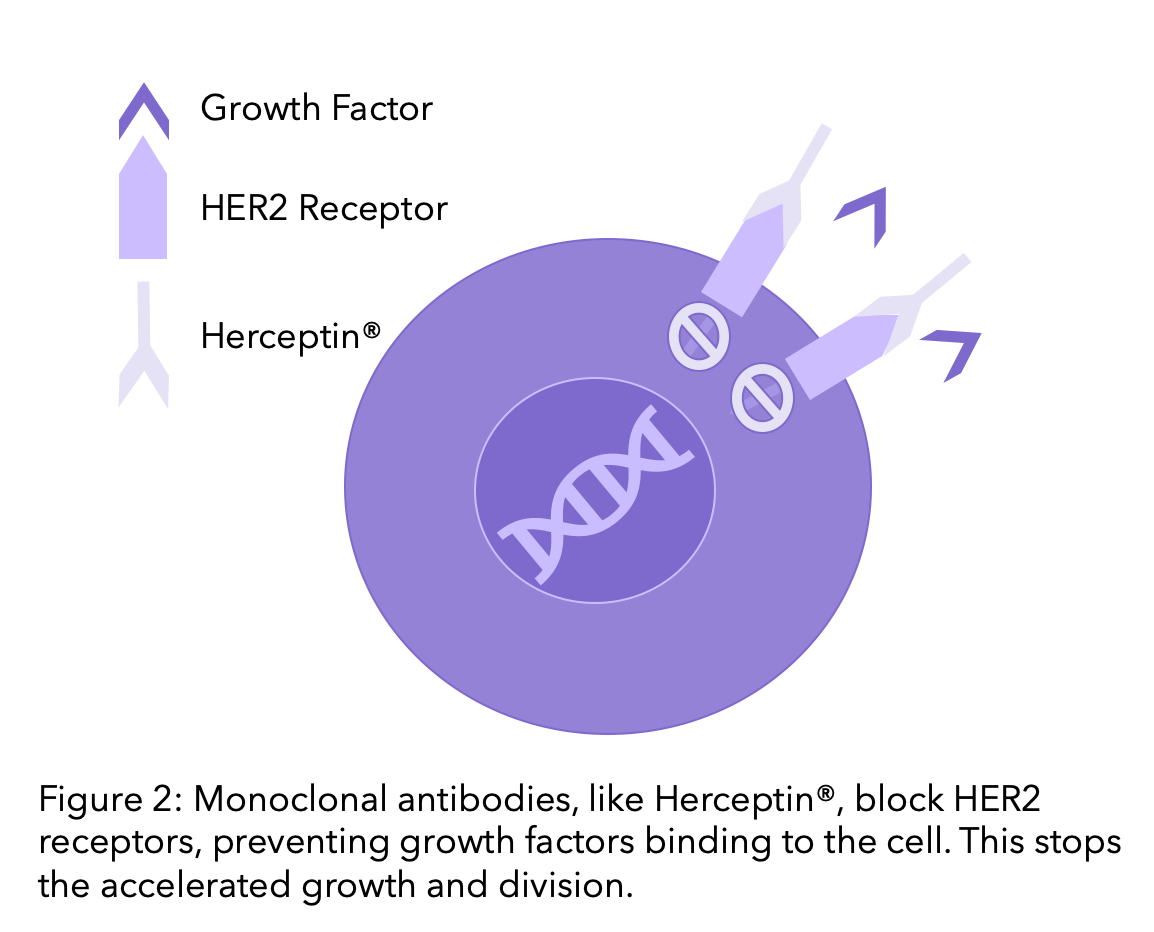 Diagram explaining monoclonal antibodies