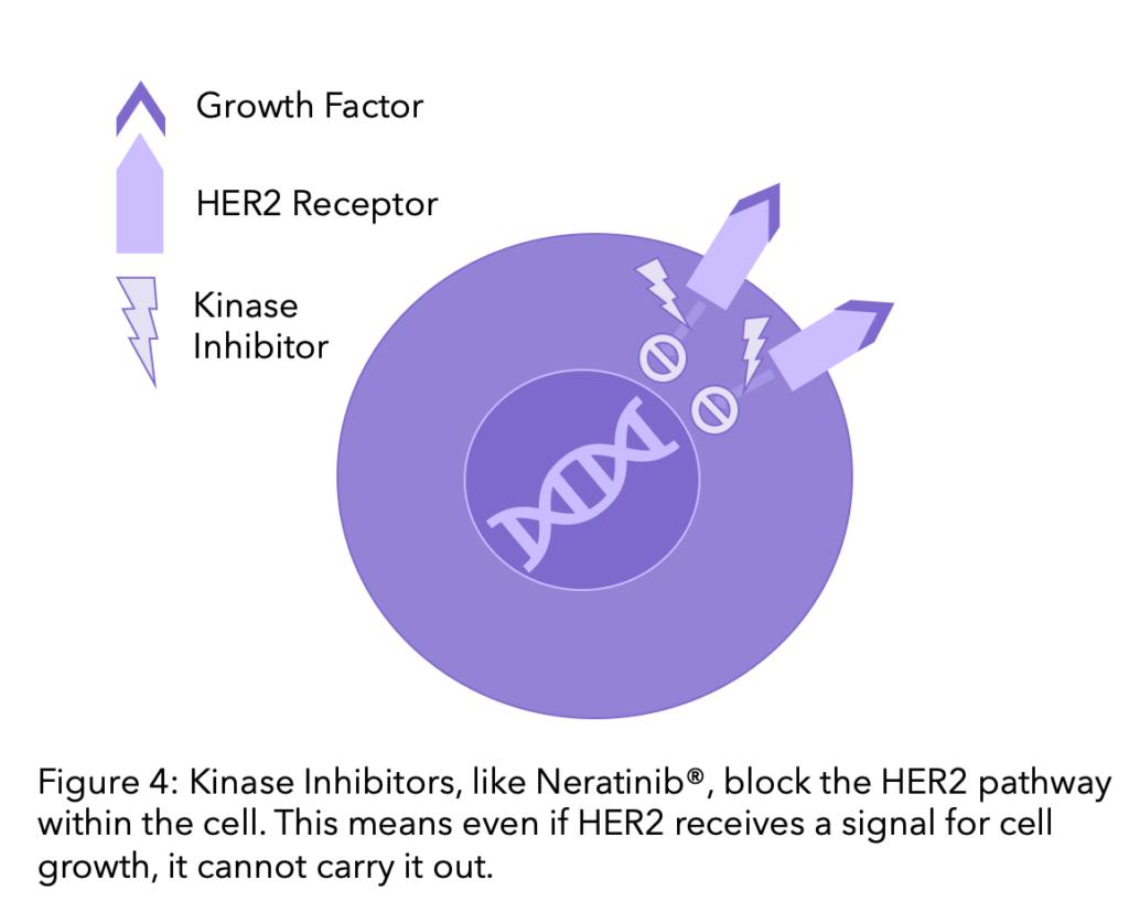 Diagram explaining kinase inhibitors