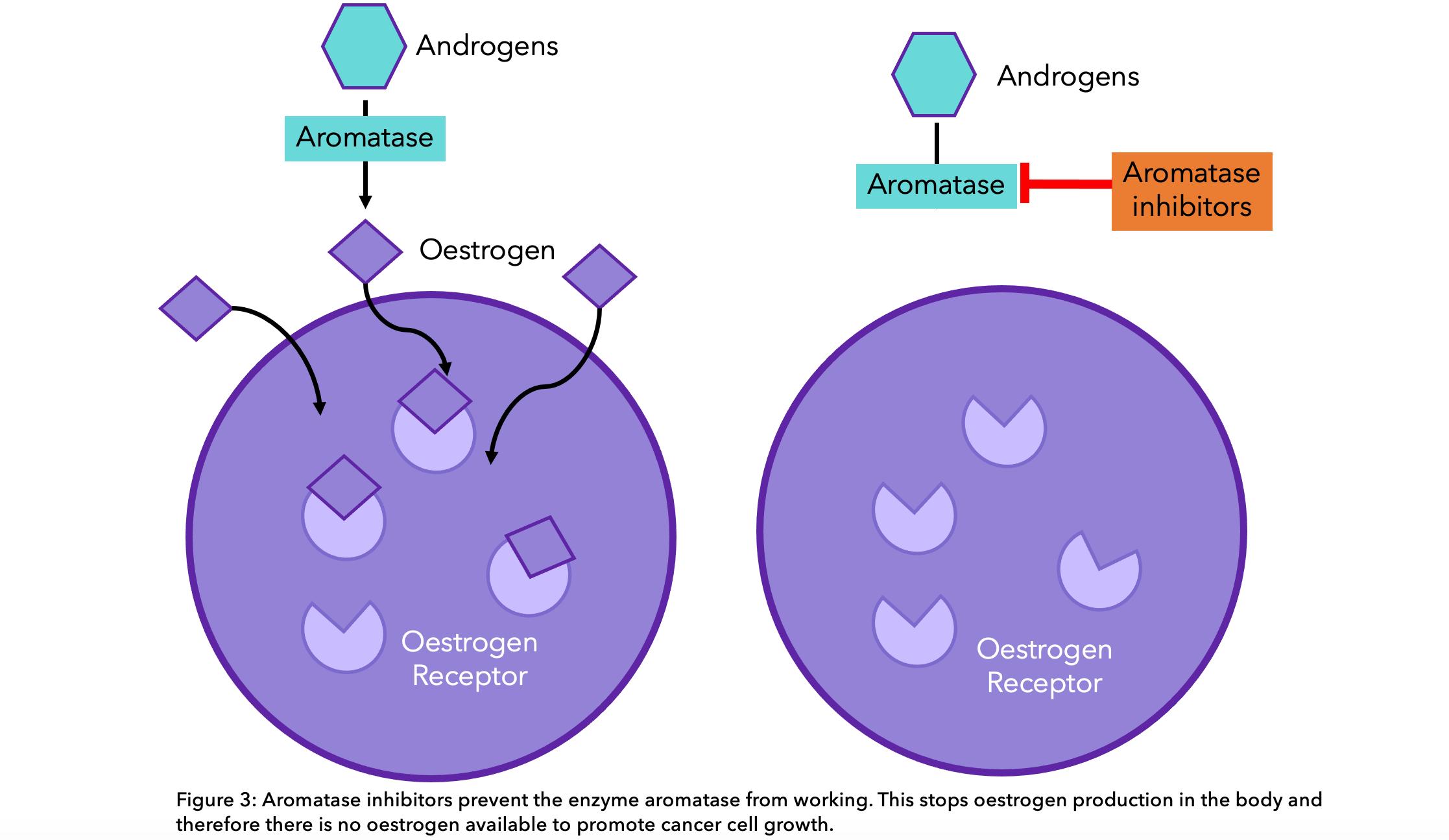 Diagram showing how aromatase inhibitors work