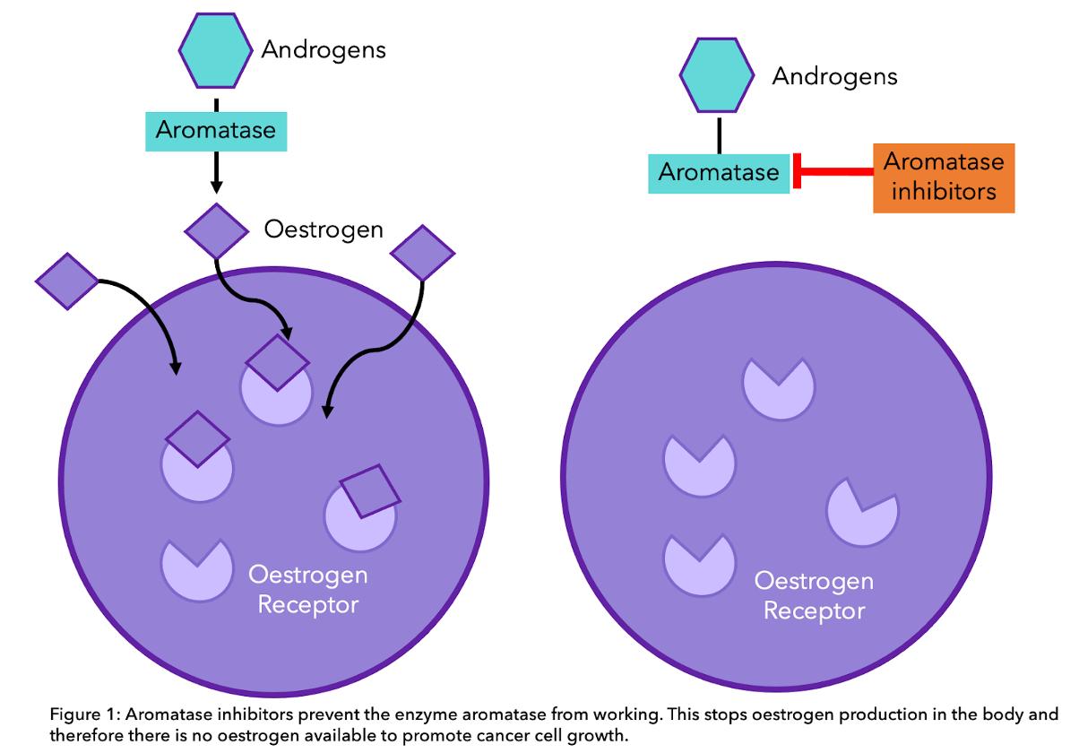 Aromatase Inhibitors Diagram