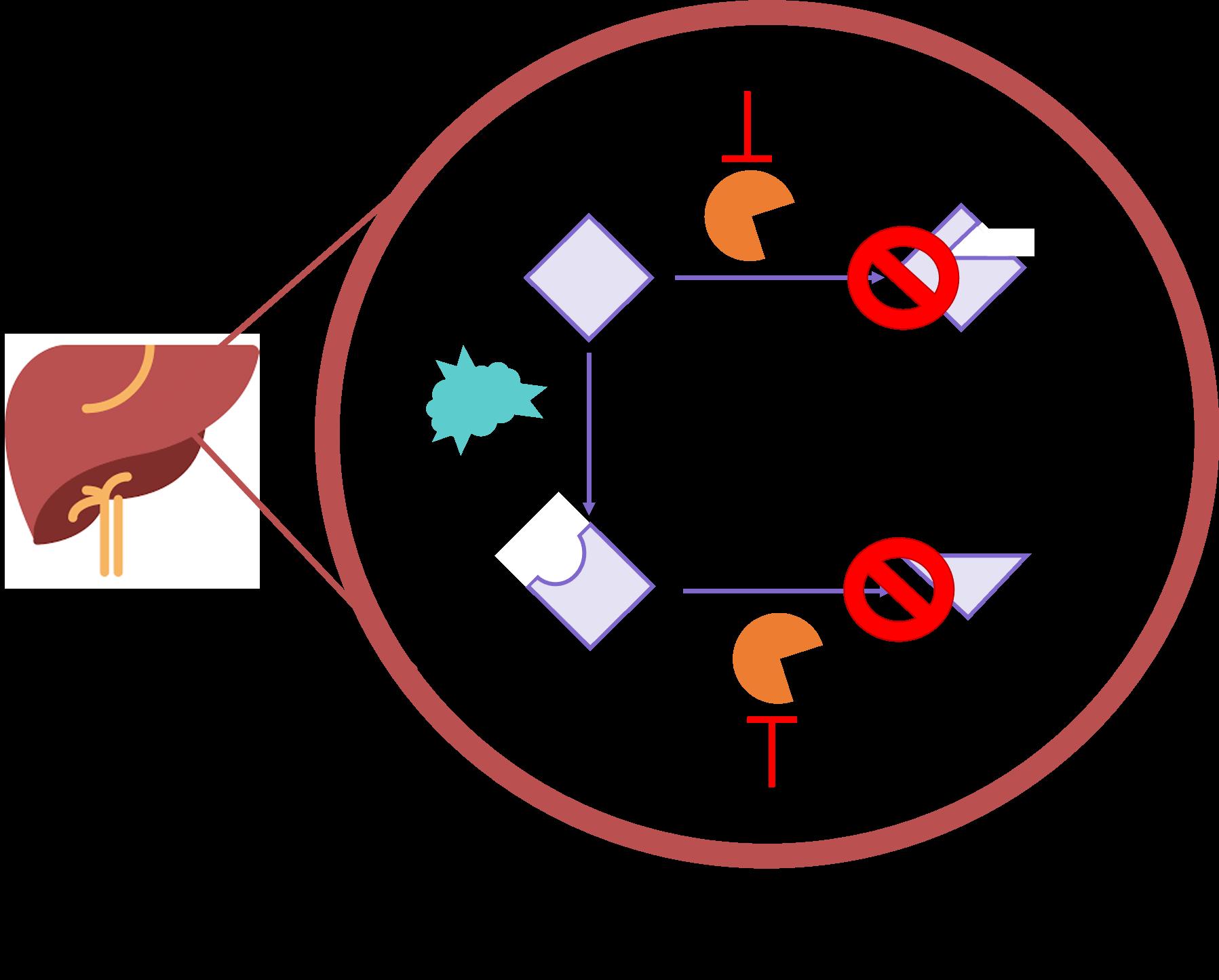 how tamoxifen works
