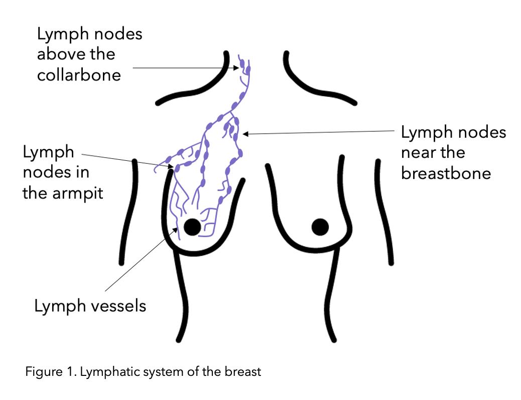 science behind lymphoedema